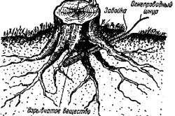 Схема корчевки пня