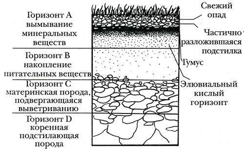 Схема почвенного покрова