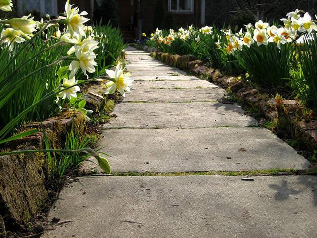 Бетонная дорожка на садовом участке