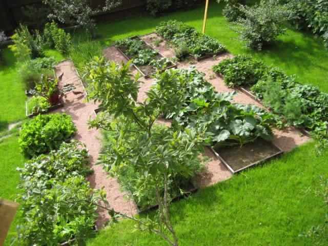 Грядки на огороде дачного участка