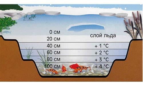 Схема распределения температур в пруду зимой