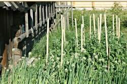 Правила посадки растений в огороде