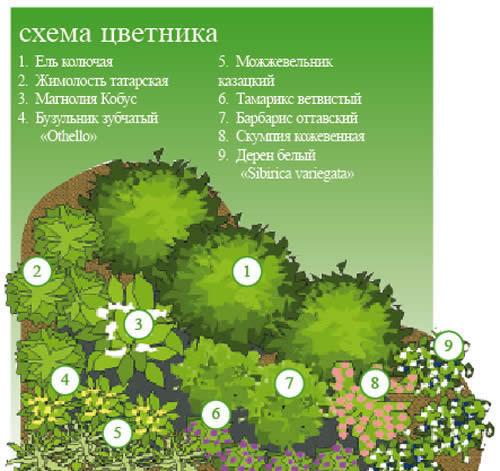 Пример расположения растений в цветнике