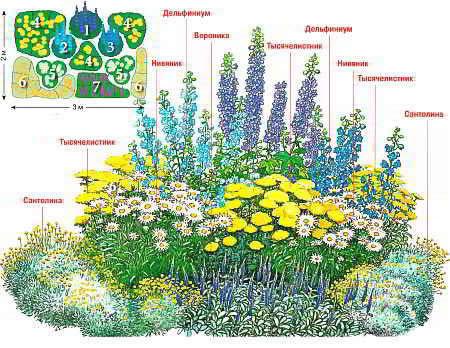 Схема расположения цветочных культур на клумбе