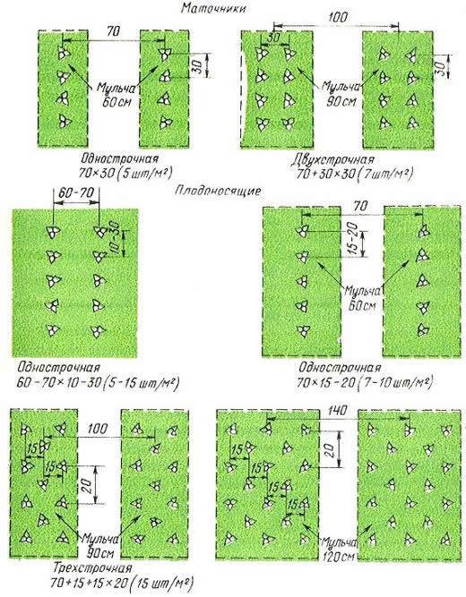 Схема посадки растений на даче