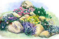 Цветник рабатка