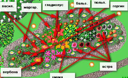Схема посадки клумбы, цветущей весь сезон