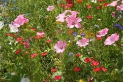 Мавританский газон на огороде