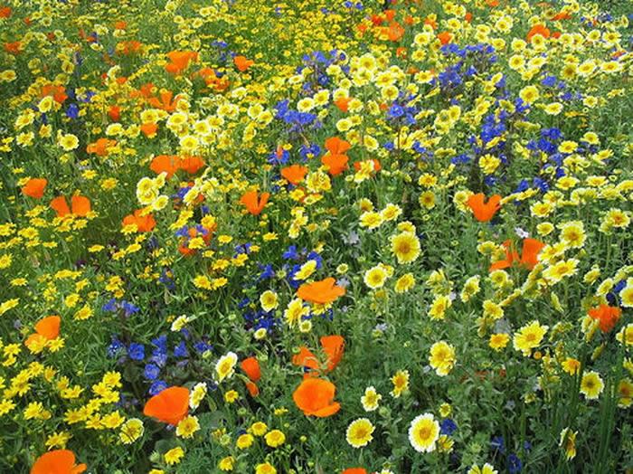 Луга с полевыми цветами 14