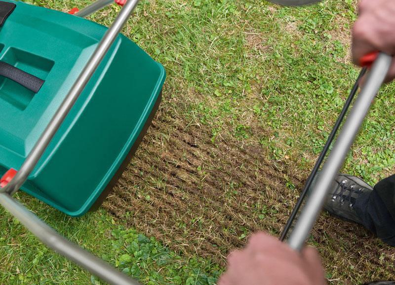 Посев газонной травы своими руками