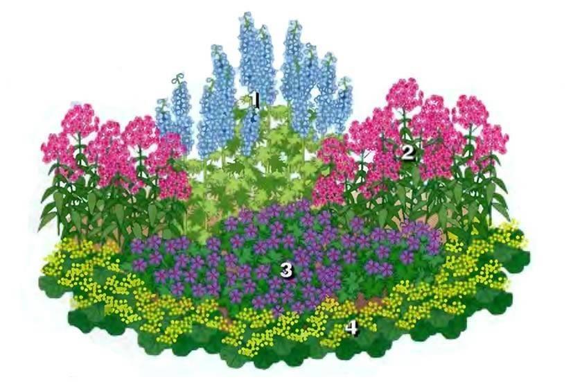 Простая схема цветника из многолетников