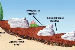 Схема альпинария