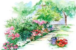 Схема ароматного цветника