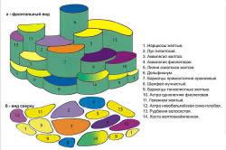 Схема цветника на даче