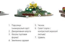Схема расположения садовых культур в клумбе