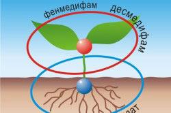 Схема химического воздействия на сорняки
