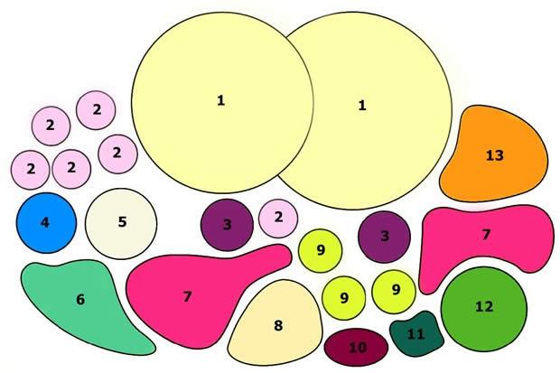 Схема июньского цветника