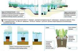 Схема искусственного водоема на даче