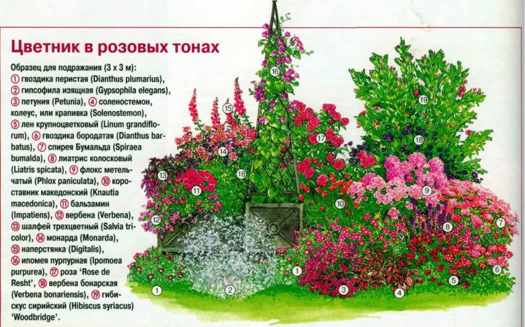 Схема клумбы в розовых тонах