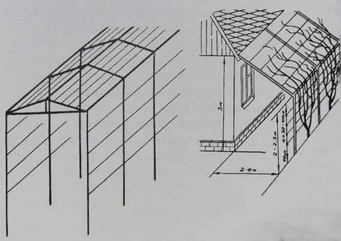 Схема монтажа шпалеры
