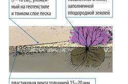 Схема посадки гравийной клумбы
