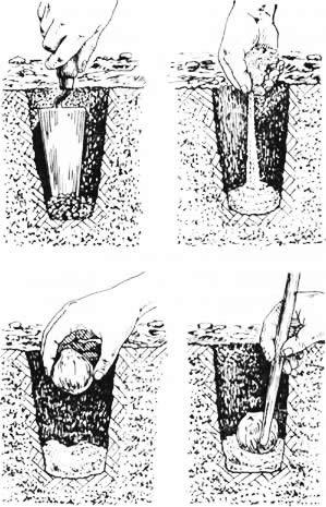 Схема посадки луковицы лилии