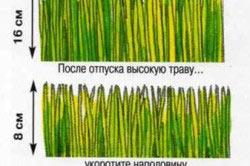 Схема правильной стрижки газона