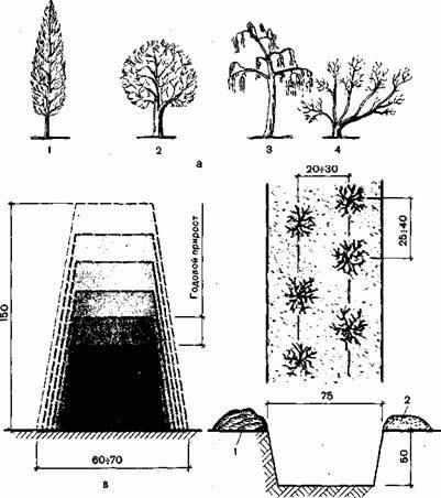 Схема прироста живой изгороди
