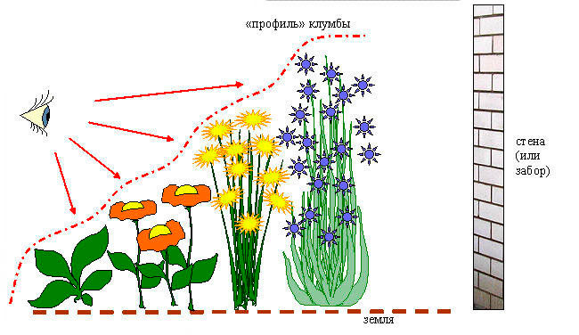 Посадка клумб схема посадки многолетних растений