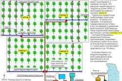План размещения системы капельного полива на участке