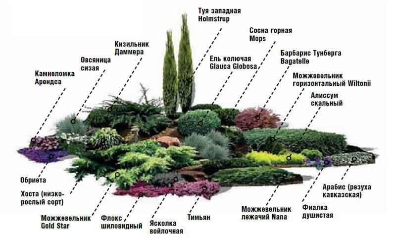 Схема сада камней и цветов.