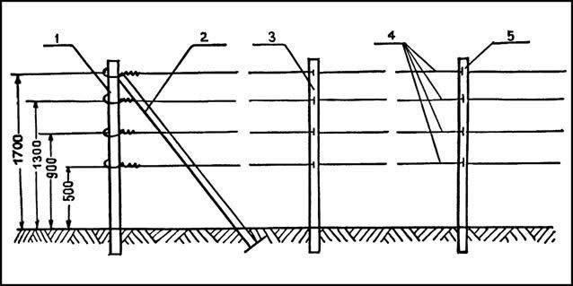 Схема шпалеры для малины