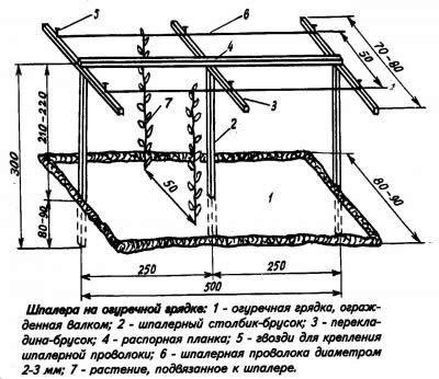 Схема шпалеры на огуречной