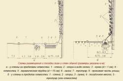 Схемы размещения и посадки лиан у стен здания