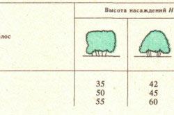 Таблица характеристик зеленых насаждений