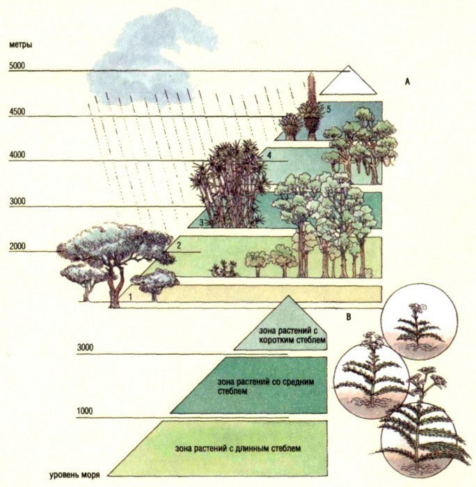 Схема зонирования территории растениями, в зависимости от уровня моря
