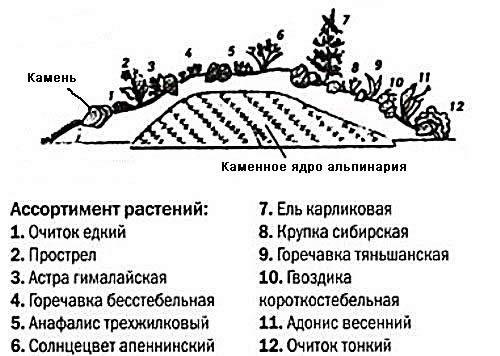 Схема высадки растений для альпийской горки