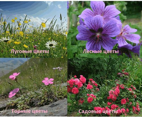 Существует несколько видов цветов: садовые, горные, луговые и лесные.