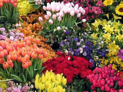Существует множество видов цветов. Они подразделяются на многолетние и однолетние.