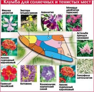Схема цветника для солнечных и тенистых мест на дачном участке
