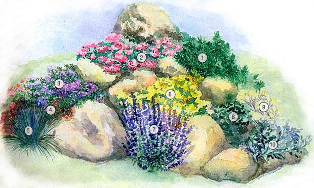 Схема цветника альпийской
