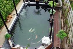 Встроенный дачный пруд с рыбками
