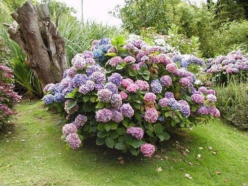 Кустовые цветы фото