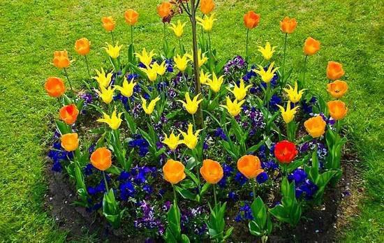 Групповая посадка садовых цветов создают прекрасную композицию.