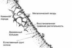 Укладка биомата