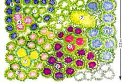 Схема клумбы из многолетних растений