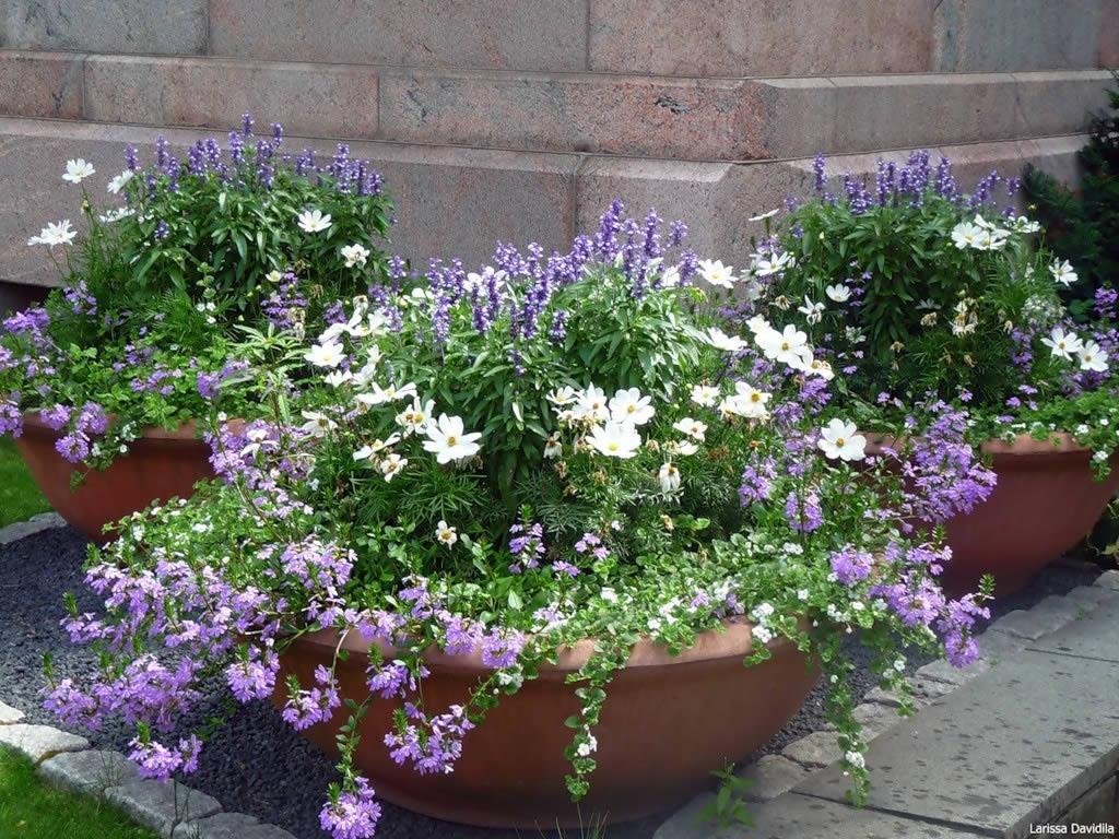 Цветы в вазонах на даче с фото