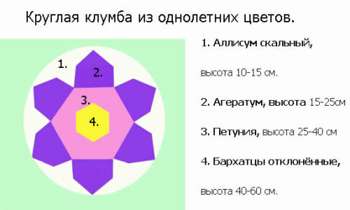 Схема круглой клумбы из однолетних цветов