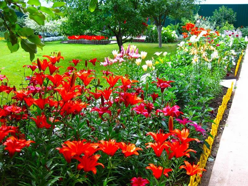 Сочетание цветов на клумбе - Dizajn-Sada ru