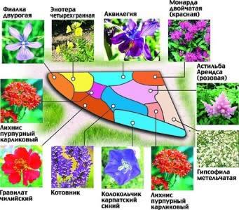 Схема цветника из многолетних растений